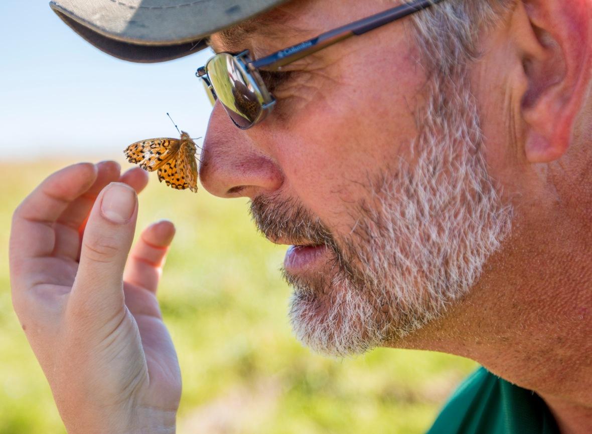 Butterfly Survey
